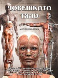 Човешкото тяло. Илюстрован атлас